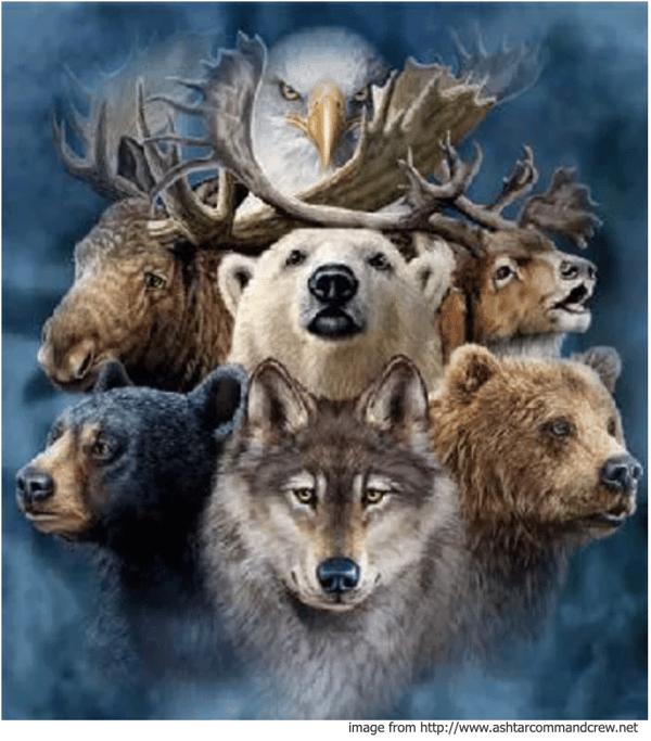 animalnation